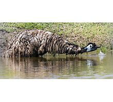 Thirsty Emu.  Photographic Print