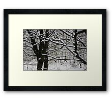 Branches of snow Framed Print