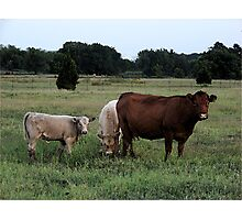 Country Bumpkins Photographic Print