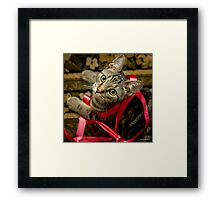Did You Need This Ribbon? Framed Print