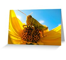 Am I Bugging You? Greeting Card