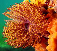 South Australia: Underwater by Matt Gibbs