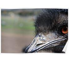 Emu Eye Poster