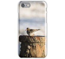Purple Sandpiper iPhone Case/Skin