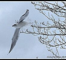 Flying Free by michaelwsf