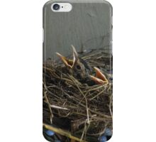 Baby Robins iPhone Case/Skin