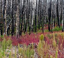 Life returns to forest fire area by David Chappell