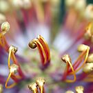 Banksia top macro by mooksool
