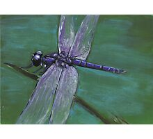 Resting Dragonfly Photographic Print