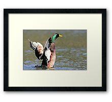 Going Quackers Framed Print
