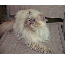 Lola, my Himalayan rescue Photographic Print