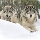 My Heart belongs 2 U - Timber Wolves by Poete100