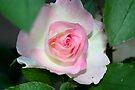 Rosebud by Evita