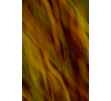 leaves of Flame Photographic Print
