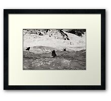 Three seals in black and white Framed Print