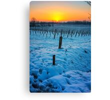 Sunset on snowy vineyard Canvas Print