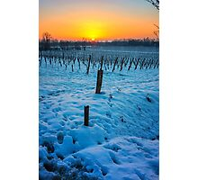 Sunset on snowy vineyard Photographic Print