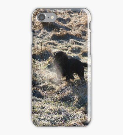 Cocker Spaniel in Frost iPhone Case/Skin