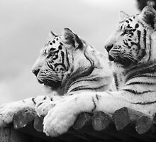 White Tigers by Leanne Jones