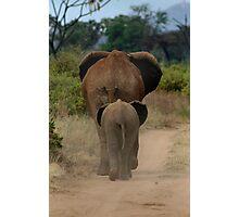Baby Elephant Walk Photographic Print