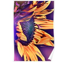 Sun On The Sunflower Gone Wild Poster