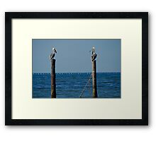 Pelican Chat Framed Print