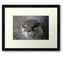 I Otter ... Framed Print
