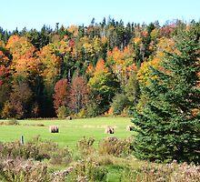 Hayfield In Stewiacke Valley, Nova Scotia by HALIFAXPHOTO