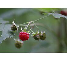 Wild Rasberry Photographic Print