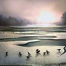 On Thin Ice by Igor Zenin