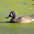 I Love My Duck Weed by TJ Baccari Photography