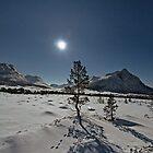 Tracks in the snow II by Frank Olsen