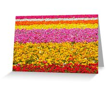 Giant Ranunculus Flower Fields Carlsbad, CA Greeting Card