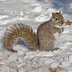 Squirrel in Snow 2 by dubya13