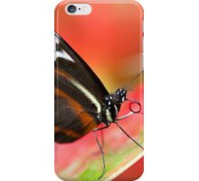 Cydno Longwing iPhone Case/Skin