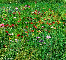 #572   Poppies & Wild Flowers by MyInnereyeMike