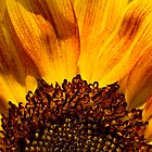 Sunflower by David Platt-Chance