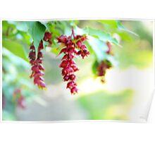 Dangling Berries  Poster