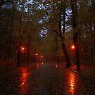 Dusk in the park 2 by aratma