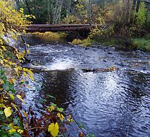 AUTUMN BY THE SMITH RIVER by MsLiz