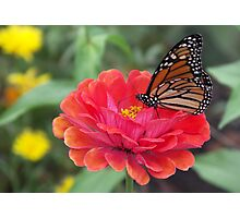 Majestic Monarch Photographic Print