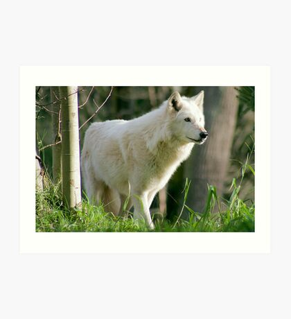 Arctic Wolf 2 Art Print