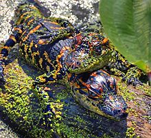 Baby Gators by venny