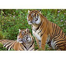 Jaya & Suriya Photographic Print