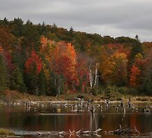 peaceful afternoon in Algonquin Park by monaiman