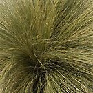 Native Grass Plant - Southport Lagoon by Caro