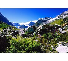 Alpine Meadow Photographic Print