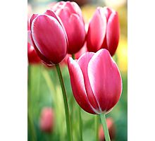 Tesselaar Tulip Festival  Photographic Print