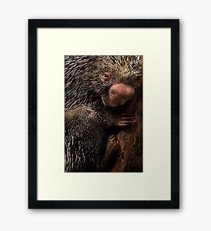 Prick Framed Print