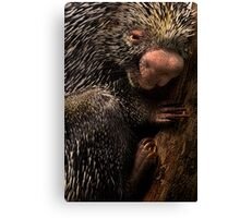 Prick Canvas Print